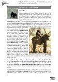 PRO WILDLIFE – SCHULMATERIALIEN GORILLASCHUTZ - Seite 5