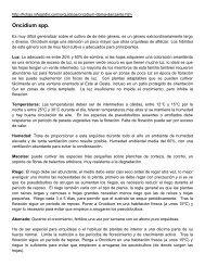 Oncidium spp. - Jardín el Encanto.cl