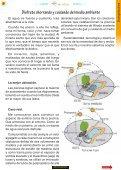 Paté de pollo con salsa rosada - Revista 4 Estaciones - Page 5