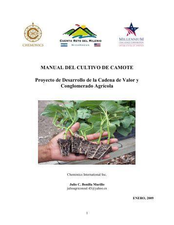 MANUAL DEL CULTIVO DE CAMOTE Proyecto de Desarrollo de la ...