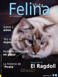 Revista Vida Felina - 1 Edición