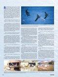 El Niño. Monstruo marino - Instituto Geofísico del Perú - Page 3