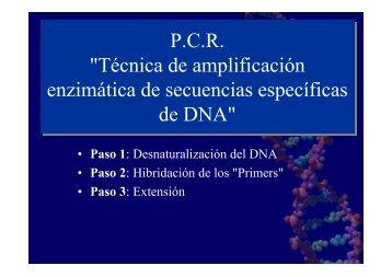 """P.C.R. """"Técnica de amplificación enzimática de secuencias ..."""
