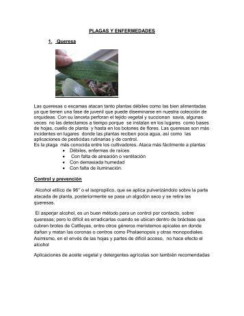 PLAGAS Y ENFERMEDADES - Club Peruano de Orquídeas