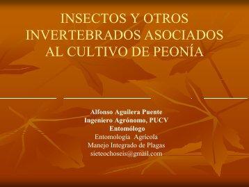 Insectos y otros invertebrados asociados al cultivo de peonia ...