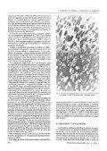 Uso de la espectroscopia Raman en la determinación de fases en el ... - Page 4