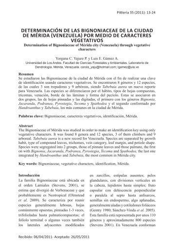 determinación de las bignoniaceae de la ciudad de mérida