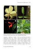 determinación de las bignoniaceae de la ciudad de mérida - Page 7