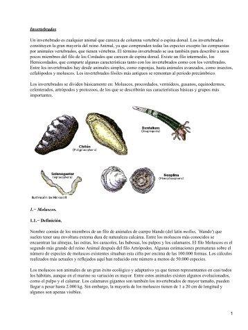 Invertebrados Un invertebrado es cualquier animal que carezca de ...