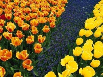 Fertirrigación de Cultivos Intensivos - Fertilizando