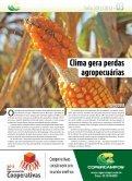 Qualidade diferenciada em sementes de soja - Copercampos - Page 3