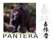 CARTILLA PANTERA.cdr