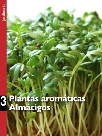 Plantas aromáticas Almácigos