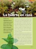 Plantas aromáticas Almácigos - Page 2