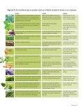 Plantas aromáticas Almácigos - Page 6
