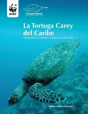 La Tortuga Carey del Caribe - Widecast