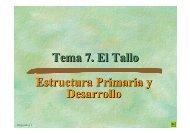 Tema 7. El Tallo Estructura Primaria y Desarrollo Estructura Primaria ...