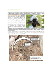 Las abejas silvestres - Facultad de Agronomía