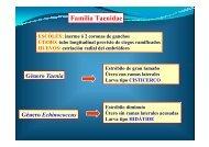 Taenia sp - Personal.us.es