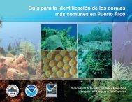 Guía para la identificación de los corales más ... - Puerto DRNA