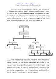 Unidad 3: Organización molecular de la célula - Biomilenio.net