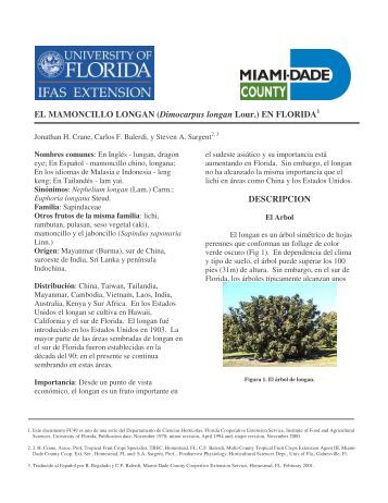 el longan - Miami-Dade County Extension Office - University of Florida