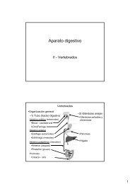 Aparato digestivo-II: Vertebrados - introducción, boca e intestino ...