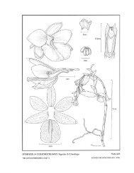 Icon. Orchid. (Mexico) 8: t. 829. 2006 - Epidendra