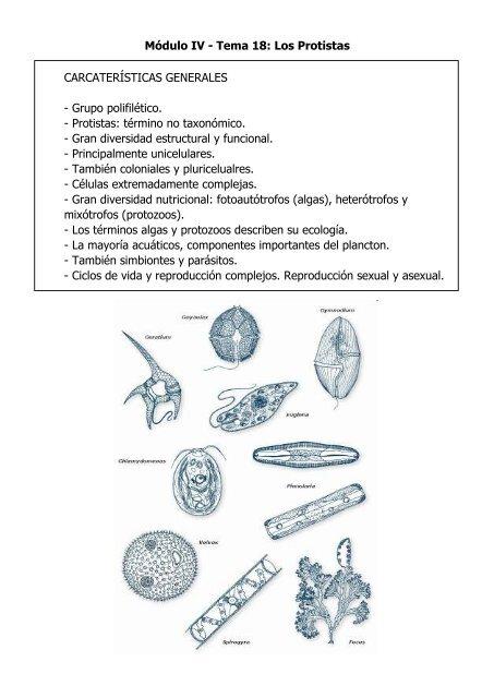 los grupos de protozoarios y algas