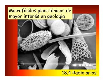 Descargar pdf Radiolarios