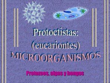 """Protoctistas - ies """"poeta claudio rodríguez"""""""