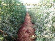 Serviço de Informação Diária 19/02/2013