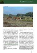 Islas del Paraná: la última frontera - M'Biguá - Page 7