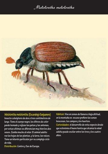 Fichas de insectos 2 – (pdf, 5.5 MB)