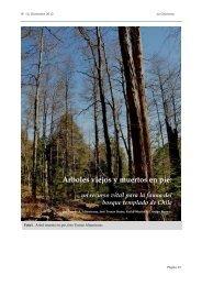 Árboles viejos y muertos en pie: un recurso vital para la fauna del ...