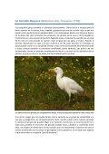 Garcilla Bueyera.pdf - Jorge Rubio - Page 3