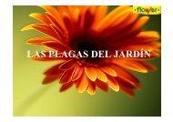 Plagas comunes Ampliado (de flower) - plantitas
