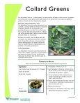 COLLARD GREENS - Page 2