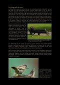 Fotografia en comederos.pdf - Jorge Rubio - Page 2