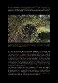 Fotografia en comederos.pdf - Jorge Rubio - Page 5