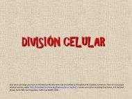 25-división celular