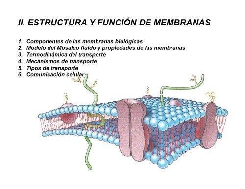 Ii Estructura Y Función De Membranas