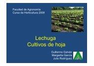 Lechuga 1 Guillermo.pdf - Facultad de Agronomía