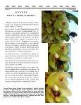 Boletín Mensual, Octubre 2007 - Asociación Costarricense de ... - Page 5