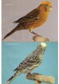 El canario Lizard - Page 2