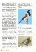 El canario Lizard - Page 3
