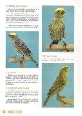 El canario Lizard - Page 5
