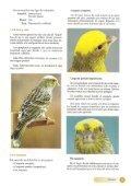 El canario Lizard - Page 6