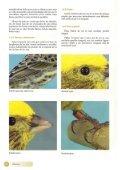 El canario Lizard - Page 7