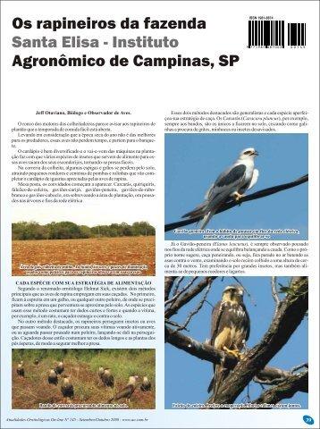 Os rapineiros da fazenda Santa Elisa - Atualidades Ornitológicas